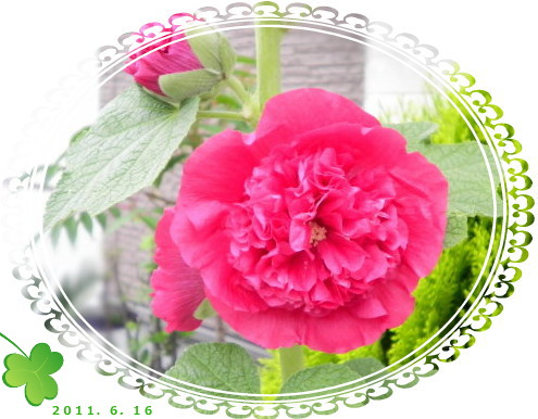 花ブ617-8
