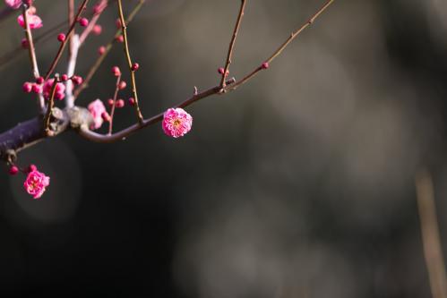 Photo-389.3
