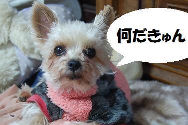 dog178_20120404195907.jpg