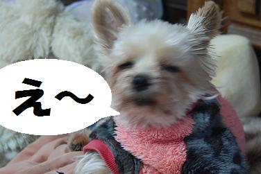 dog179_20120404195906.jpg