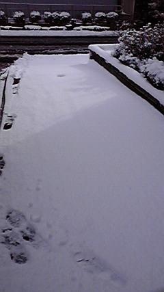 1月30 雪 (8)