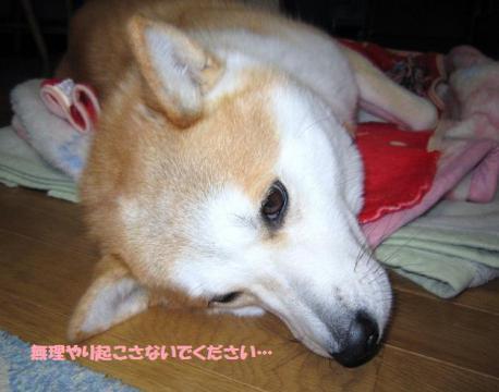 IMG_2248うめちゃん