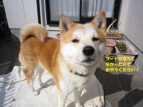 IMG_2305うめちゃん