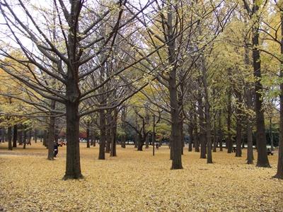 代々木公園 イチョウの森