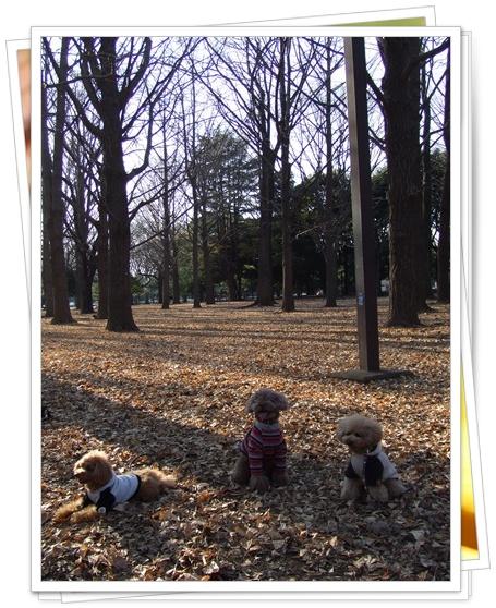 銀杏の森にて