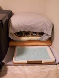 20090104寝床