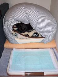 20090104寝床2