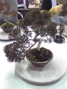 盆栽教室20040220