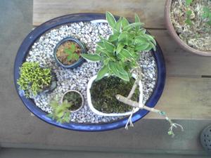 豆盆栽20100506