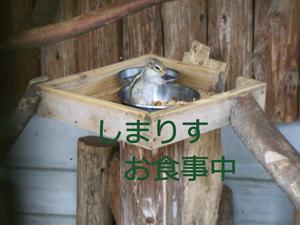 お食事中20100421