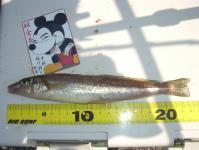 shicoku-2010-5-2 025