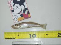 oozone-miura-2010-5-4 004