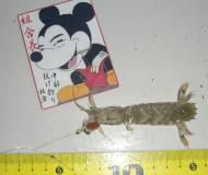 miura-2010-5-8 019
