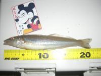 miura-2010-5-8 009
