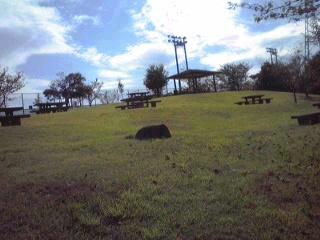 大仏山公園3