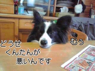 むうむう犬。