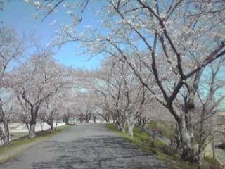 2010桜。
