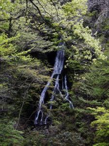 宮ヶ瀬ダム6(大沢の滝)