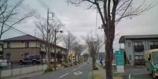 keyaki2.jpg