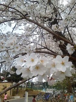 fc2_2013-03-24_20-03-29-468.jpg