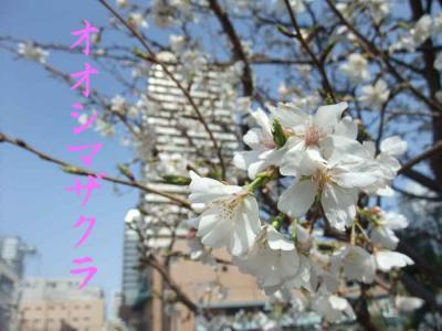mini_12_oosima_DSCF5016.jpg