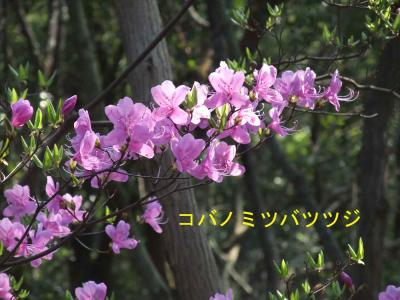 mini_31_kobano_DSCF5075.jpg