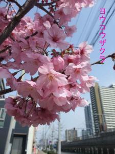 mini_32_youkou_DSCF5050.jpg