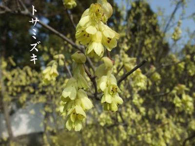mini_a_12_tosamizuki_DSCF4815.jpg
