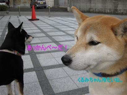 IMG_1298_Rく