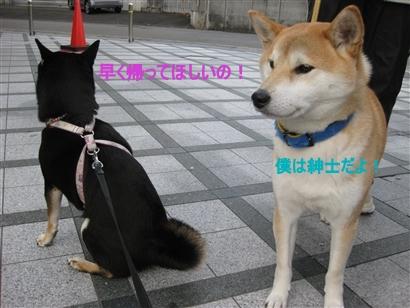 IMG_1296_Rく