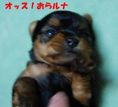 1_20100419081043.jpg