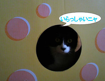 2011.5.20いらっしゃい~