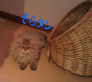 2011.5.20そらさん