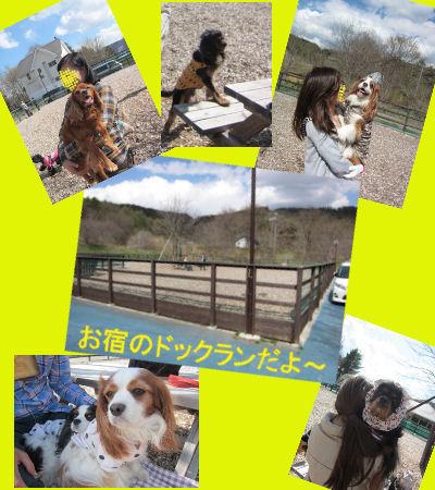 2011.5.14ドックラン広い~