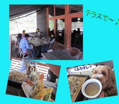 2011.5.15ばーそー