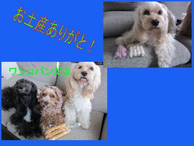 2011.5.15おみやげ~