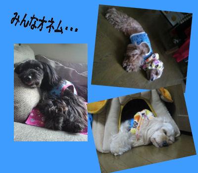2011.6.4おつかれ~