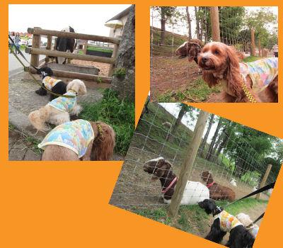 2011.6.5動物さん