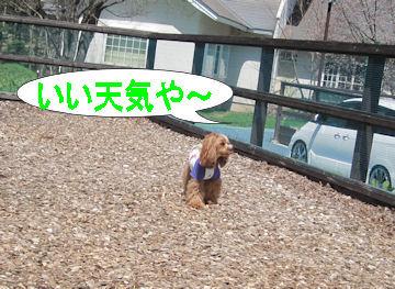 2011.5.15いい天気~