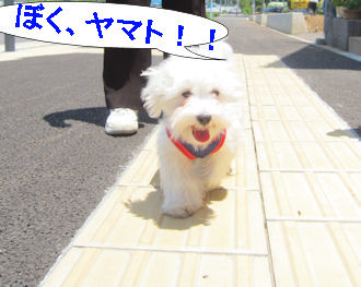 2011.5.19僕ヤマト