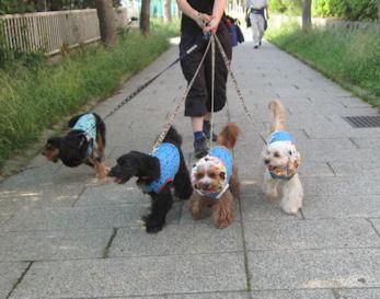 2011.6.4散歩1