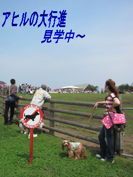 2011.6.5あひる