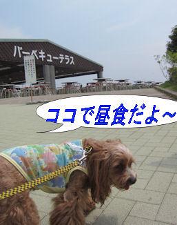 2011.6.5ココでごはん!