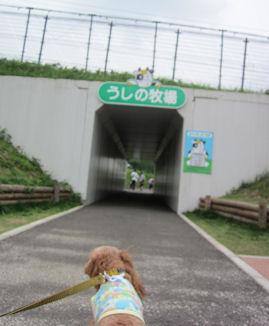 2011.6.5トンネル