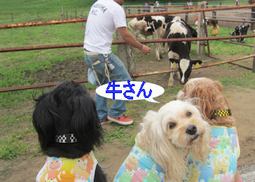 2011.6.5うしさ~ん