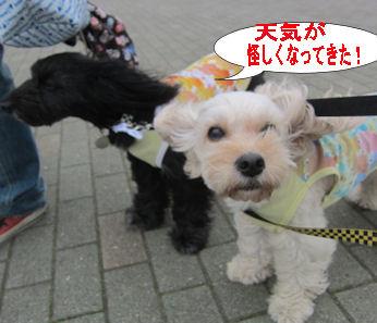 2011.6.5あやしく・・・
