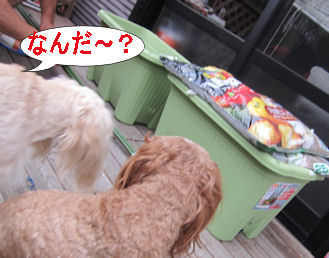 2011.6.5なんだ~?
