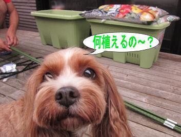 2011.6.5なにうえるの~?
