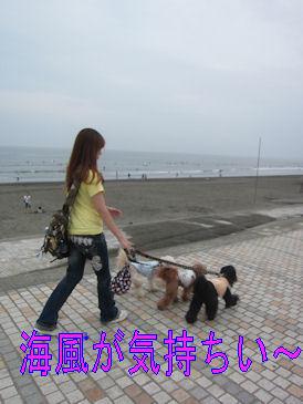 2011.6.19散歩~