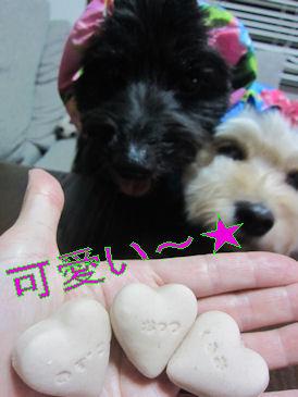 2011.6.22かわいい~